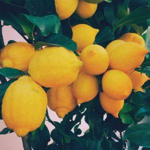 Lemon Lively Living oil, certified organic Australian pure