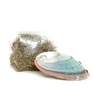 Desert rose and abalone shell set